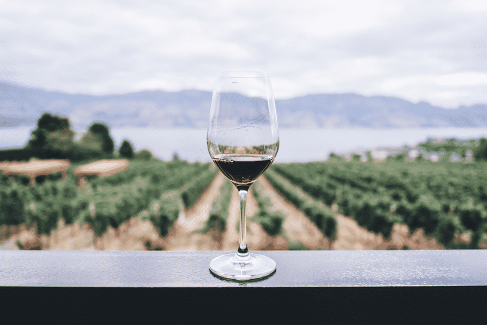 Wine glass with red wine against a backdrop of a vineyard